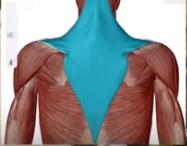 姿勢改善筋肉